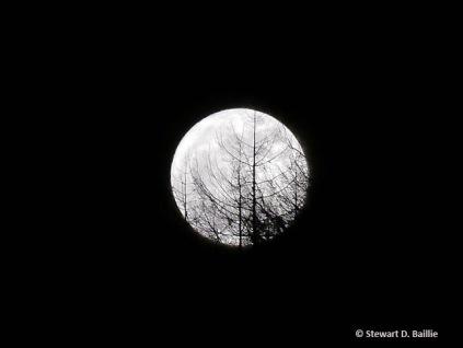 Gallery 3: Barrhill moon (© Stewart D. Baillie) aluminium-mounted print 30 x 30 cm