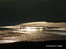 Gallery 3 Janefield gold (© Stewart D. Baillie) aluminium-mounted print 60 x 45 cm